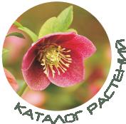 Каталог растений